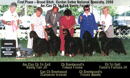 PICTURE: Brood Bitch, GSCA National, 2000